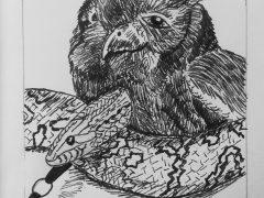 Owl and Snake
