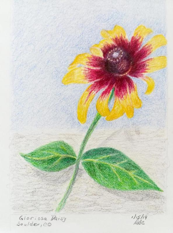 01-15-19 -Gloriosa Daisy
