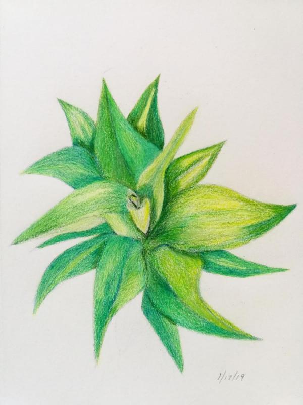 01-17-19- Contour Spiky plant