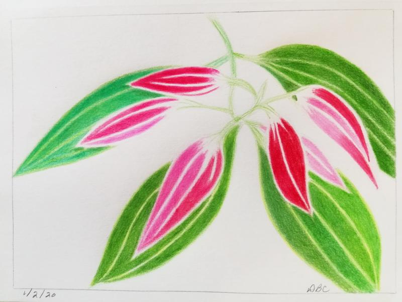 01-2-20- Cinnamomum Leaves