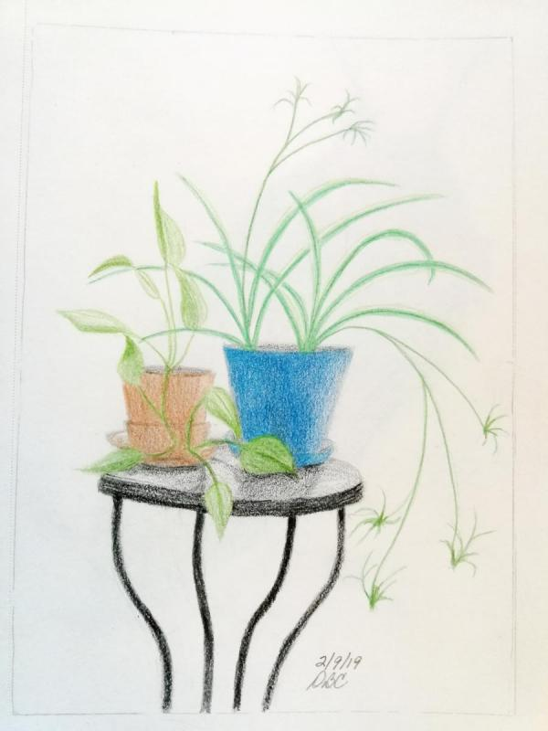 02-09-19- House plants