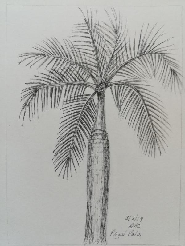 03-08-19- Royal Palm