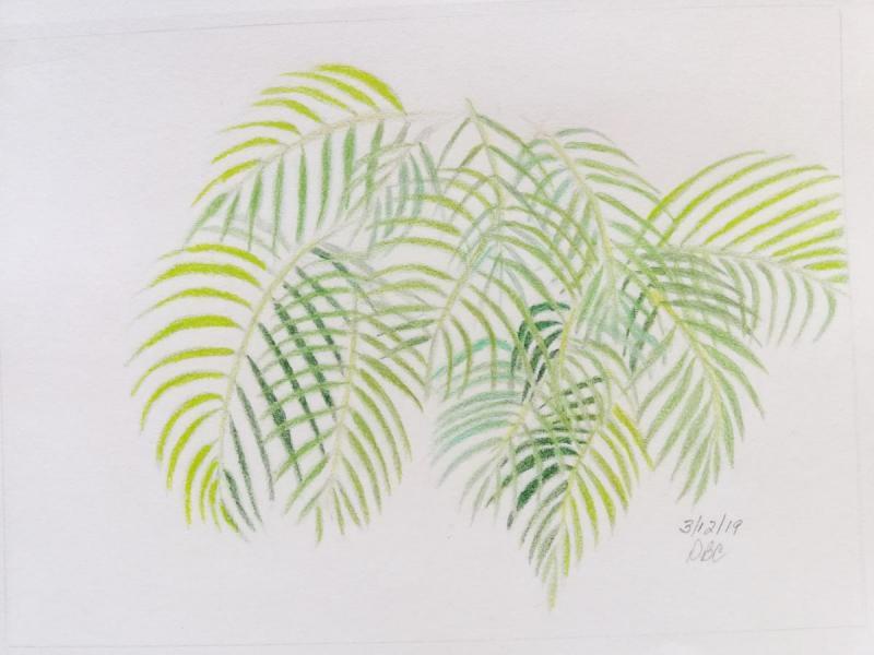 03-12-19-Palm Fronds 1a