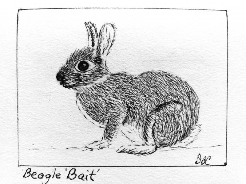 10-03-Beagle Bait