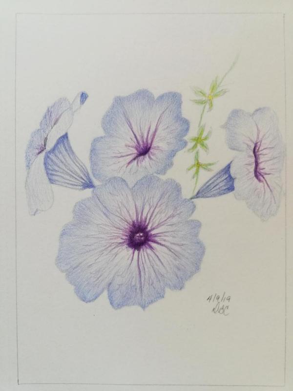 04-09-19 - Petunias