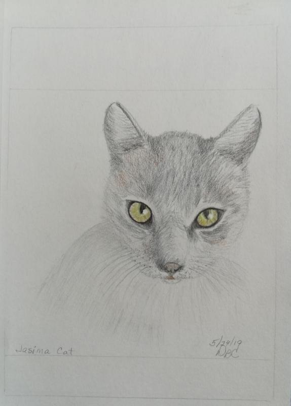05-24-19- Jasima Cat