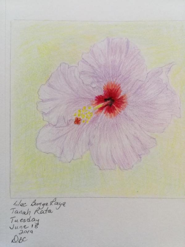 06-18-19- Lilac Bunga Raya