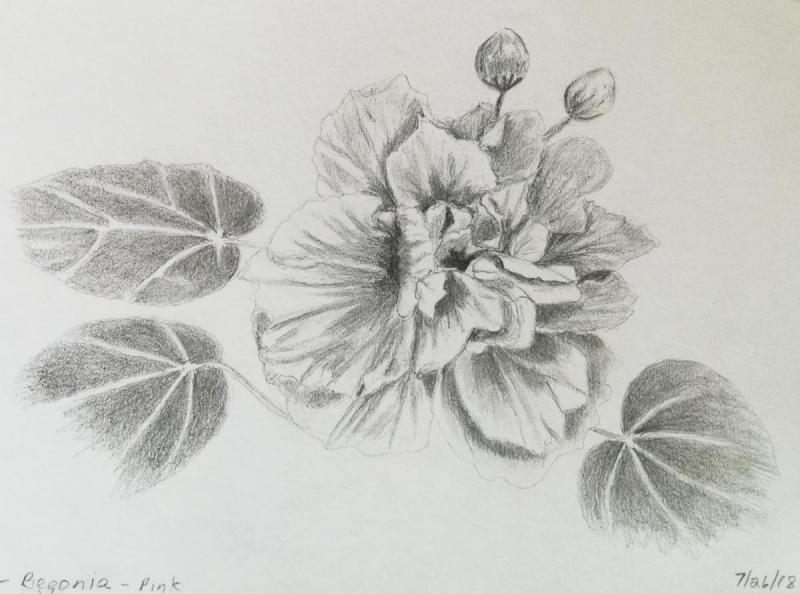 07-26-18- Awana Begonia