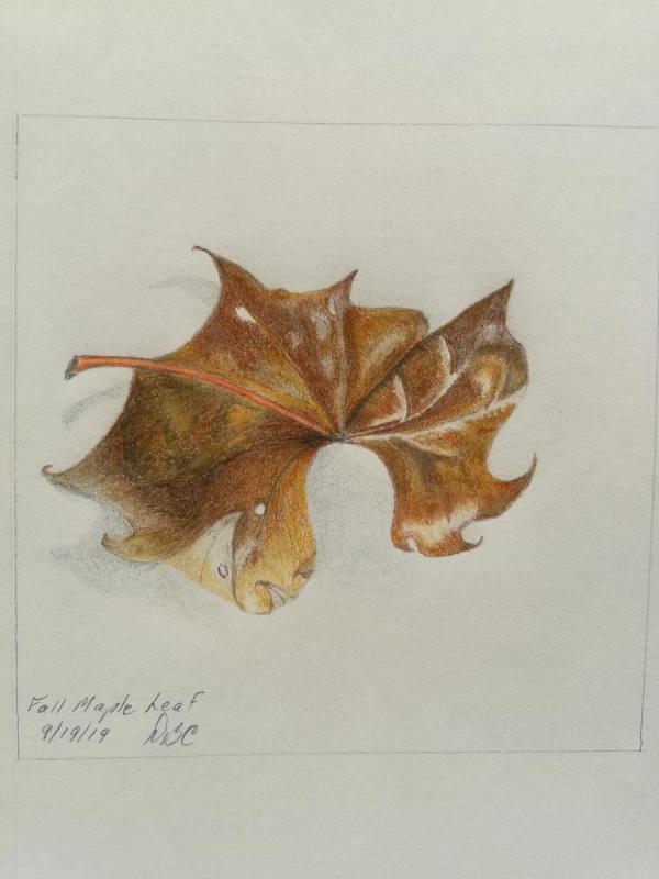 09-19- Fall Maple Leaf