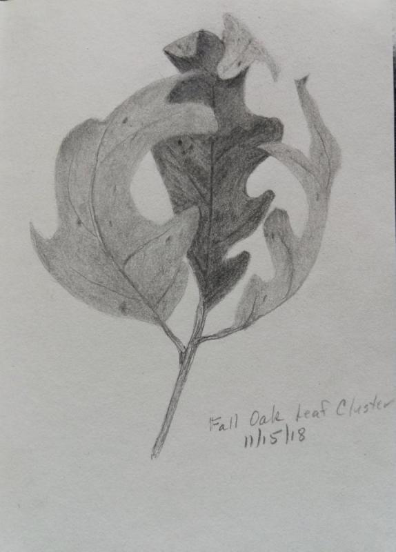 11-16-18 - Oak Leaf Cluster
