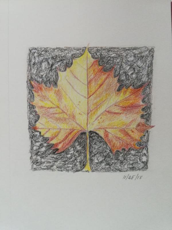 11-26-18- Maple leaf on pavement