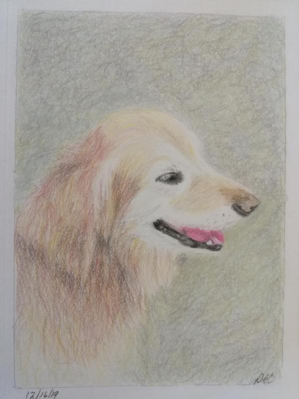 12-16- Long Haired Dog b